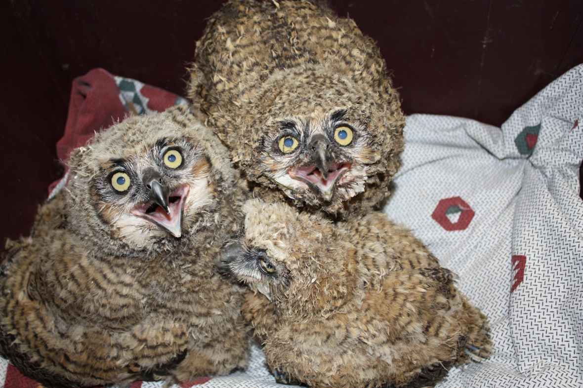 A state and federally licensed wildlife rehabilitation center specializing in birds of prey