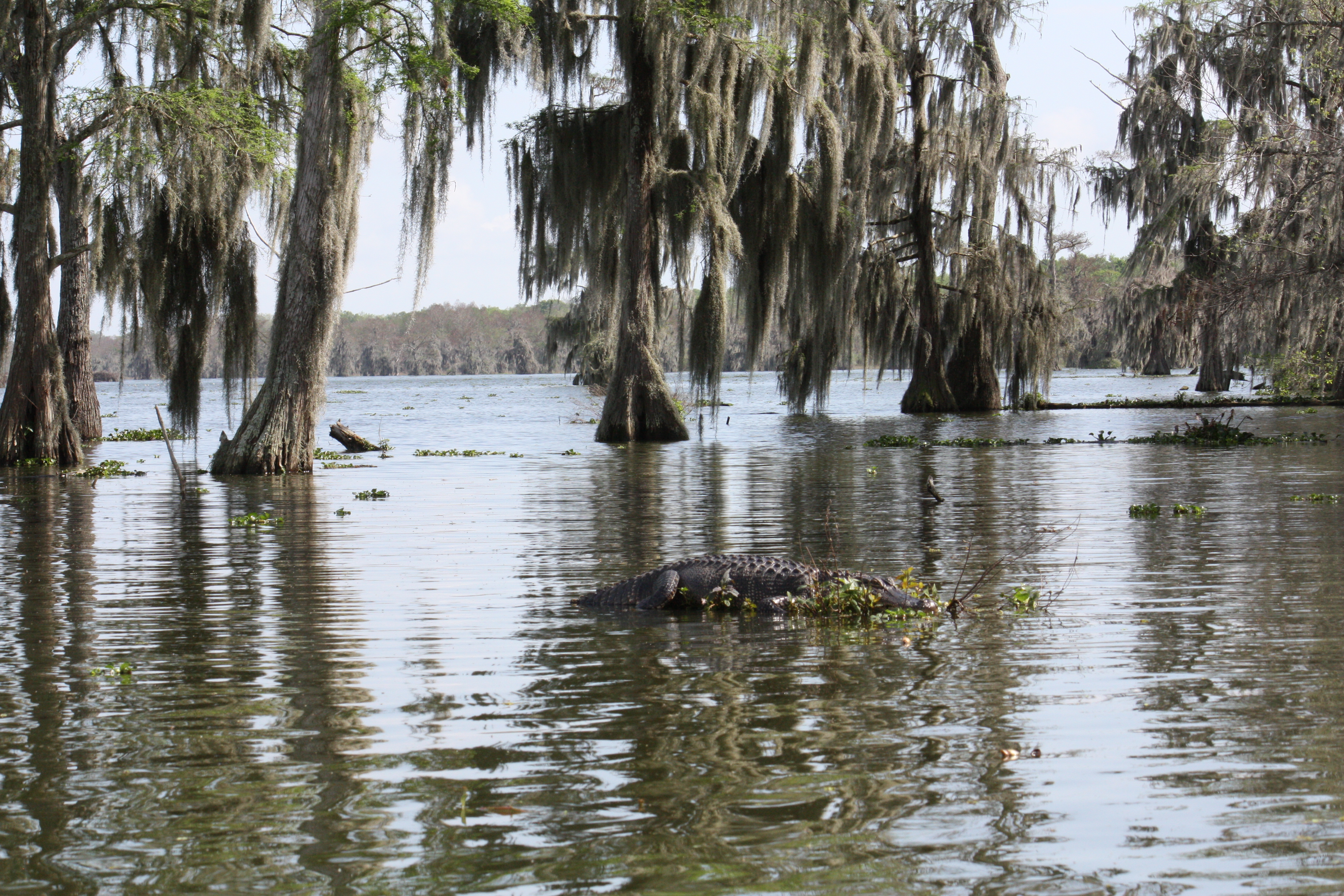 lake homes in charlotte nc with Birding In The Atchafalaya Basin on 258634 in addition The Peninsula Homes furthermore 1856194 What Ways Would South Florida Better additionally 3 Essential Tips For Buying A Luxury Home likewise Troutman Lake Norman Real Estate.
