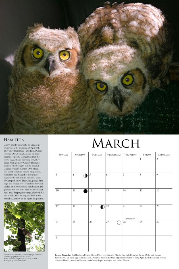 A sneak peak from the 2013 Owl Moon calendar!